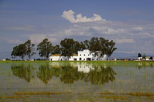 Reflejos en los arrozales del Delta del Ebro
