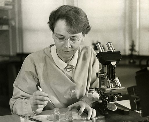 Barbara McClintock (1902-1992) shown in her laboratory in 1947