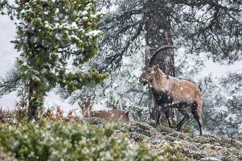 Archivo:Llegada del invierno a las montañas de levante - WLE Spain 2015.jpg