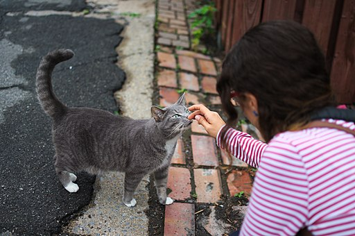 Cat being petted by Santamarcanda in Rue Holt, Montreal