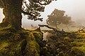 O Fanal, Ilha da Madeira, Portugal.jpg
