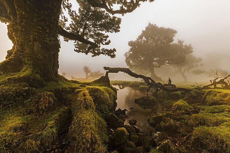 Archivo:O Fanal, Ilha da Madeira, Portugal.jpg